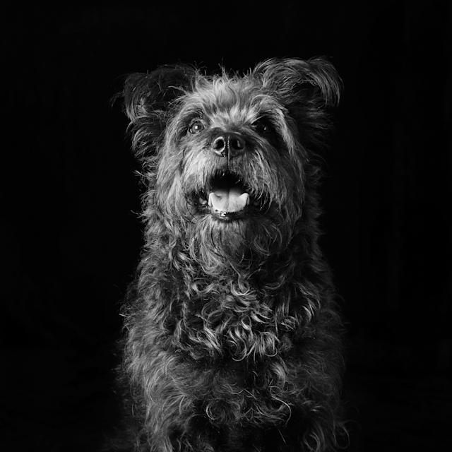 Bentley the dog. (Photo: Emma O' Brien/Caters News)