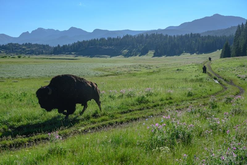 Blockchain Capital Leads $25M Funding Round for Libra Member Bison Trails
