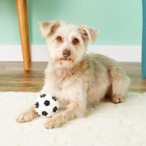Gnawsome Squeaker Soccer Ball Toy. (Photo: Chewy)