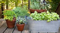 """<p>To create contrast with terracotta pots, transform inexpensive galvanized-steel <a href=""""https://www.goodhousekeeping.com/home/gardening/advice/g1007/backyard-decorating/"""" rel=""""nofollow noopener"""" target=""""_blank"""" data-ylk=""""slk:washtubs into planters"""" class=""""link rapid-noclick-resp"""">washtubs into planters</a>. This long, low oval version, with drainage holes poked in the bottom, shows off a basil crop.</p>"""