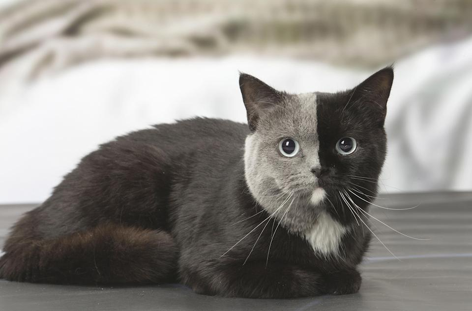 The adorable cat was snapped by Jean-Michel Labat (Caters)