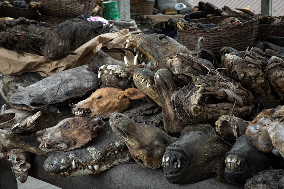 World Animal Protection allege the wildlife trade continues in many West African countries despite the pandemic. Source: Aaron Gekoski for World Animal Protection