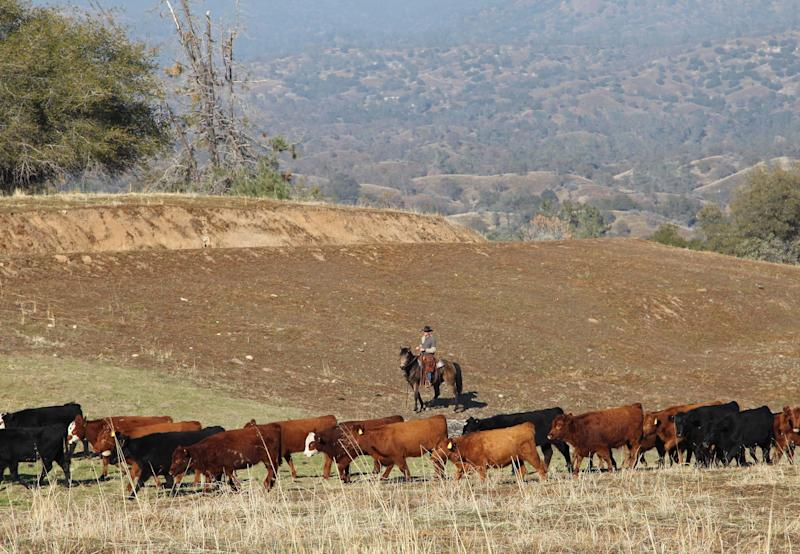 Conservationists team up with ranchers, loggers