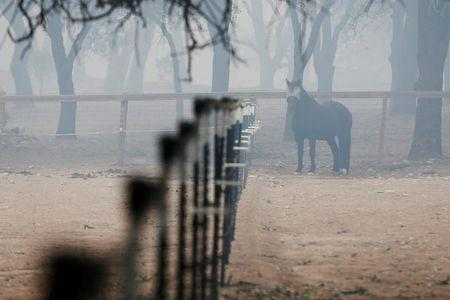 FILE PHOTO: A horse is seen along Highway 12 during the Nuns Fire in Sonoma, California