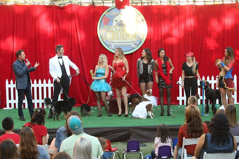 The dog show group date