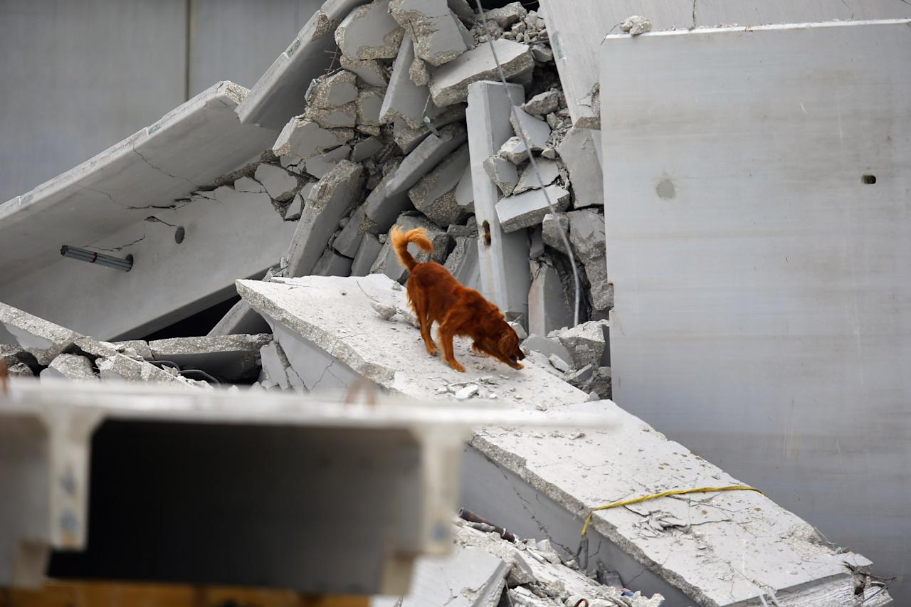 A search and rescue dog is used to find possible survivors in the rubble of a four-story parking garage that was under construction and collapsed at the Miami Dade College?s West Campus on October 10, 2012 in Doral, Florida.  Early reports indicate that one person was killed, at least seven people injured and an unknown number of people may be buried in the rubble.  (Photo by Joe Raedle/Getty Images)