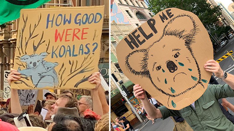 After devastating bushfires, protesters took to the streets in January, calling on the government to do more to help the koala by tackling climate change. Source: Michael Dahlstrom
