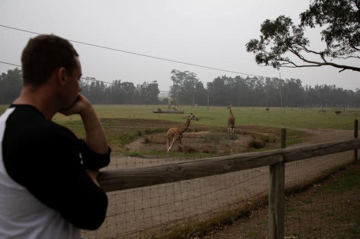 Director of Mogo Zoo Chad Staples looks at the zoo's giraffes in the village of Mogo