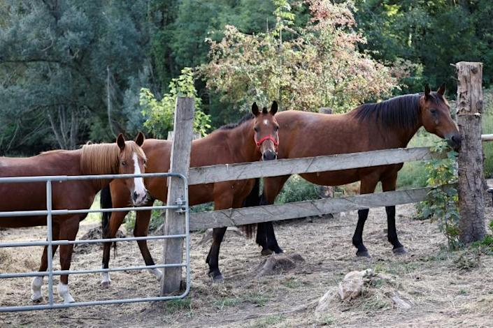 Reports have come throughout the summer, sometimes on an almost daily basis, of new horse mutilations across France