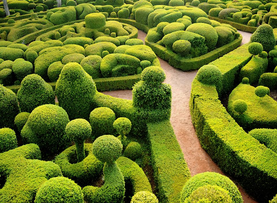 Garden trends: free-form topiary