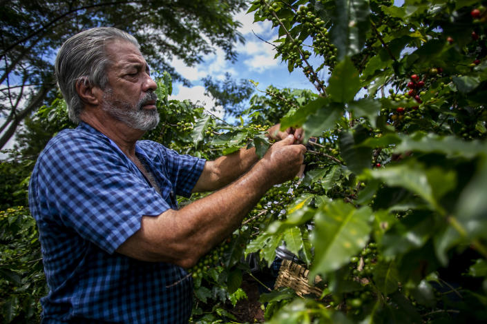 Pedro Pons, who worked as a coffee producer on his family farm Hacienda Pons in the town of Lares for three decades.  (Johnny De Los Santos / ConPRmetidos)