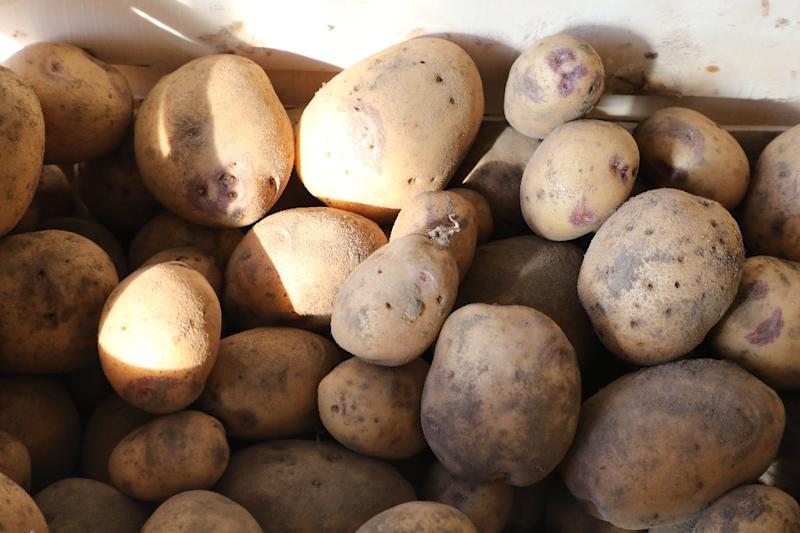 """A new study says the introduction of potatoes and the resultant increase in productivity """"dramatically reduced conflict"""" both within and between states for some two centuries (AFP Photo/LUDOVIC MARIN)"""