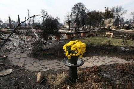 Fresh flowers are seen in the aftermath of the Tubbs Fire in the Coffey Park neighborhood of Santa Rosa
