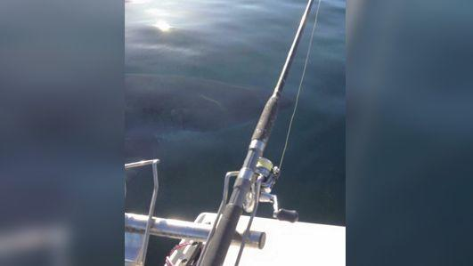 On the same day, this 4m great white was spotted 30km away. Photo: Facebook