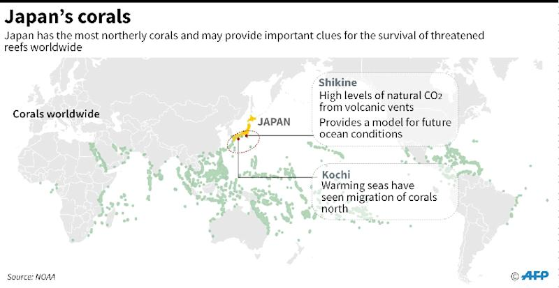 Graphic highlighting Japan's corals, which scientists say can provide important clues for the survival of threatened reefs worldwide (AFP Photo/John SAEKI)