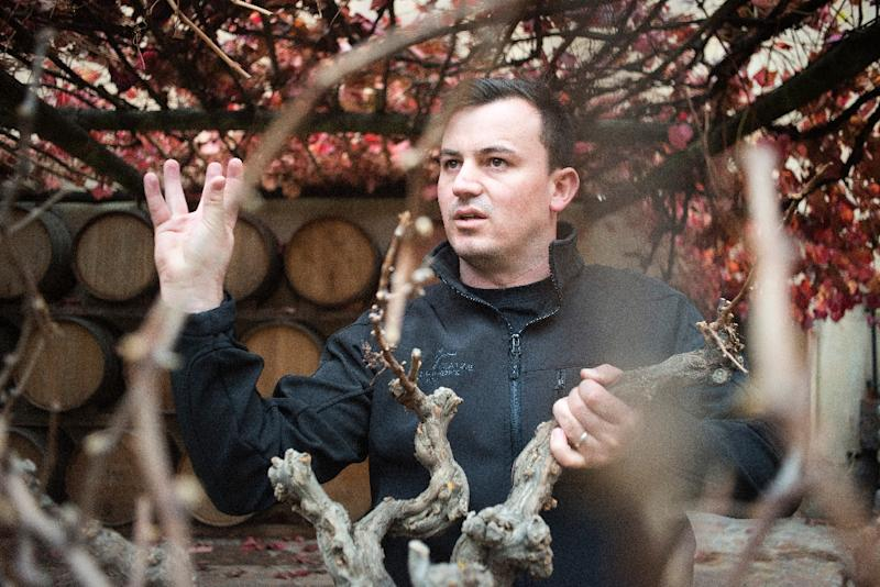 RJ Botha looks through a bush vine on the Kleine Zalze estate on May 15, 2015, in Stellenbosch, about 50 km from Cape Town (AFP Photo/Rodger Bosch)