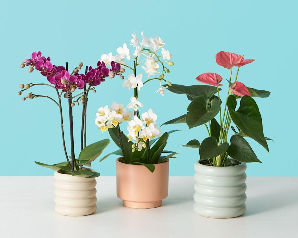 """<a href=""""https://fave.co/35ss6tX"""" target=""""_blank"""" rel=""""noopener noreferrer"""">The Sill</a> delivers plants — either potted or not — with simple care instructions. Choose from plant categories that fit your lifestyle, like """"<a href=""""https://fave.co/2Jbu74L"""" target=""""_blank"""" rel=""""noopener noreferrer"""">pet-friendly</a>,"""" """"<a href=""""https://fave.co/2vN2xHV"""" target=""""_blank"""" rel=""""noopener noreferrer"""">low-light tolerant</a>,"""" """"<a href=""""https://fave.co/3ajadAq"""" target=""""_blank"""" rel=""""noopener noreferrer"""">for beginners</a>"""" and even """"<a href=""""https://fave.co/31UC9GP"""" target=""""_blank"""" rel=""""noopener noreferrer"""">faux plants</a>."""" The Sill recently also unveiled its first<a href=""""https://fave.co/2WN0U7U"""" target=""""_blank"""" rel=""""noopener noreferrer"""">blooming-plants collection</a>, featuring <a href=""""https://fave.co/2xj6KU2"""" target=""""_blank"""" rel=""""noopener noreferrer"""">orchids</a> and <a href=""""https://fave.co/2WN0U7U"""" target=""""_blank"""" rel=""""noopener noreferrer"""">anthuriums</a>.<br /><br /><a href=""""https://fave.co/35ss6tX"""" target=""""_blank"""" rel=""""noopener noreferrer"""">Check out plants at The Sill</a>."""