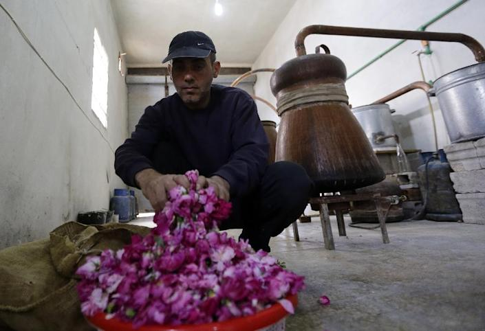 Exported to Europe, especially during the Crusades, the ancient damask rose has been cultivated in other countries including France, Morocco, Iran and Turkey (AFP Photo/Louai Beshara)
