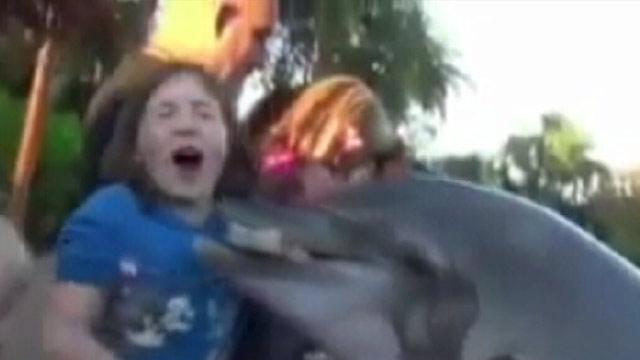 Dolphin Bites 8-Year-Old Girl at Sea World