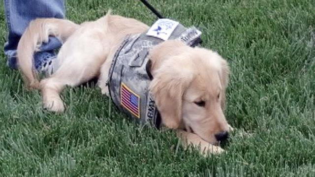 Wounded Warriors Helping Dogs Help Vets