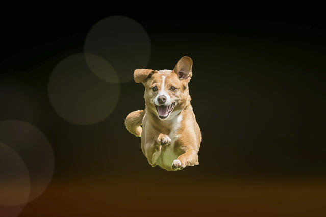 <p>The dogs were photographed and appear to be flying. (Photo: Peter Mueller/Caters News) </p>