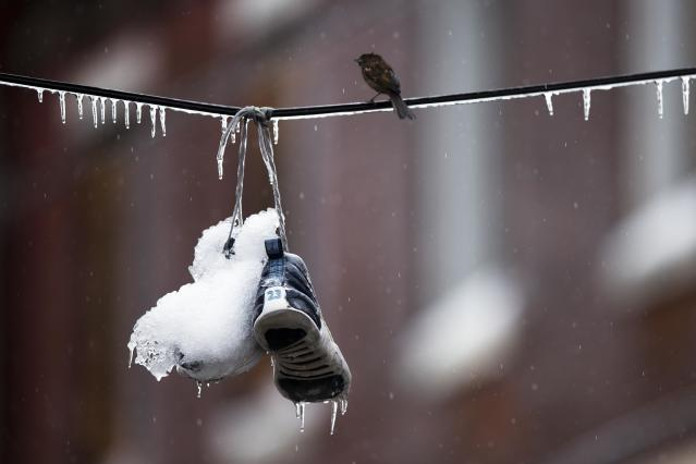 A bird perches next to ice covered sneakers hanging from utility lines after a winter storm Wednesday, Feb. 5, 2014, in Philadelphia. Icy conditions have knocked out power to more than 200,000 electric customers in southeastern Pennsylvania and prompted school and legislative delays as well as speed reductions on major roadways. (AP Photo/Matt Rourke)