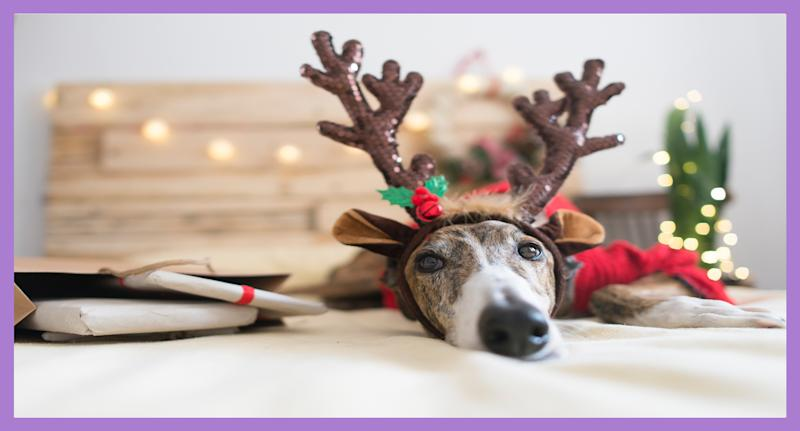 Planning and preparation is key to make sure your pets have a safe, stress-free holiday season. (Photo: Getty Creative)