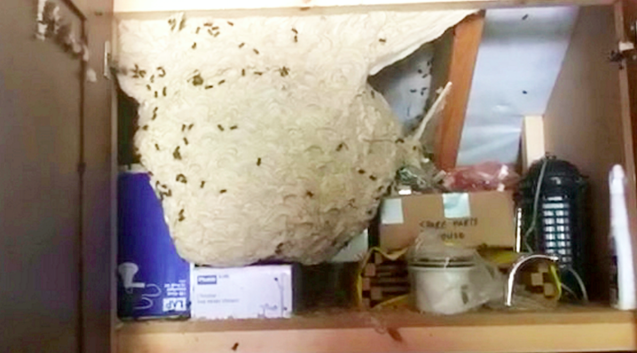 <em>A garage cupboard hid the giant wasp nest, that was the size of a boiler (SWNS)</em>