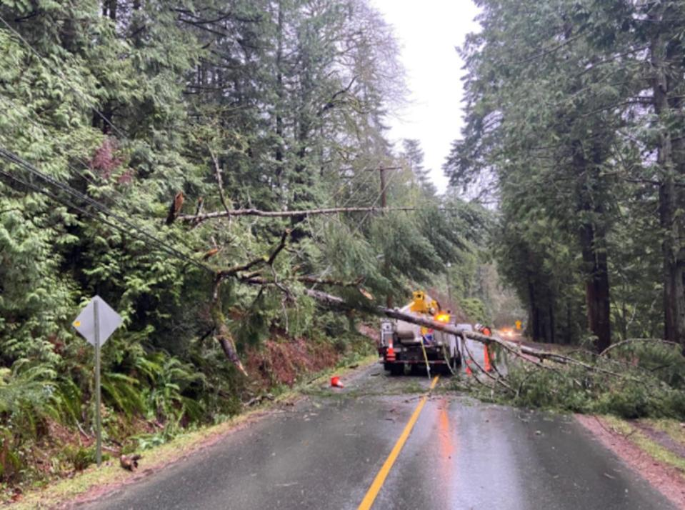 PHOTOS: Violent wind gusts over 150 km/h whip through B.C.