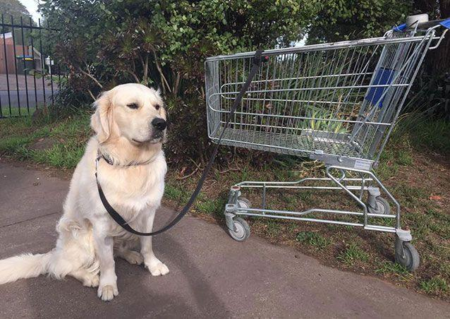 Andrew Mitchell has trained Trevor the Trolley how to walk his dog Storm. Picture: Facebook/Officeworks