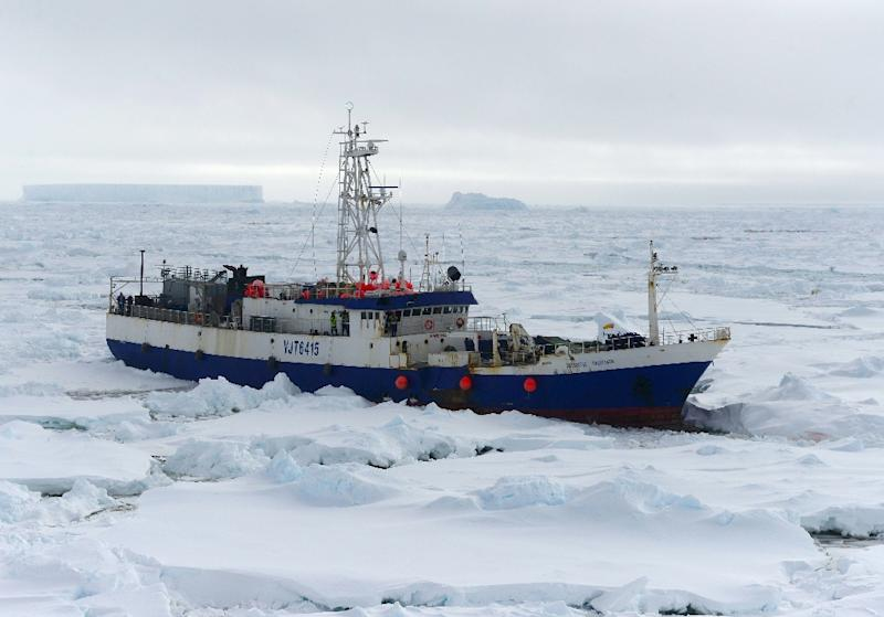 The US Coast Guard Cutter Polar Star begins breaking up the ice around a stranded Australian fishing vessel northeast of McMurdo Sound, in Antarctica on February 13, 2015 (AFP Photo/Po1 George Degener)