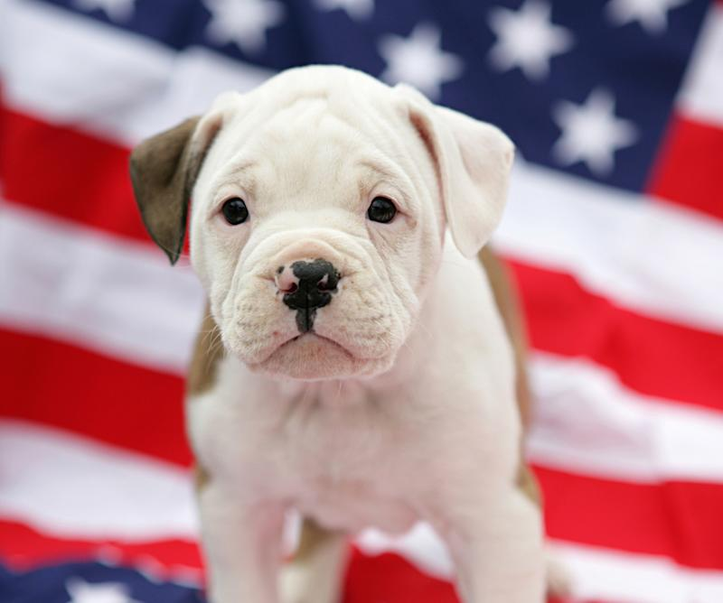 The 4th of July is a dangerous time for pets, so here's how to keep them safe