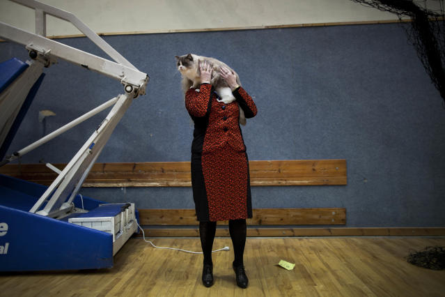 <p>Natalia Lerner, who immigrated to Israel in 1991 from the city of Tyumen in Siberia, presents her cat to the judges of a cat competition in the central Israeli city of Holon, June 14, 2012. Cats are prominent in Russian culture, and most members of Israeli cat societies are immigrants from the former Soviet Union. (Photo: Oded Balilty/AP) </p>