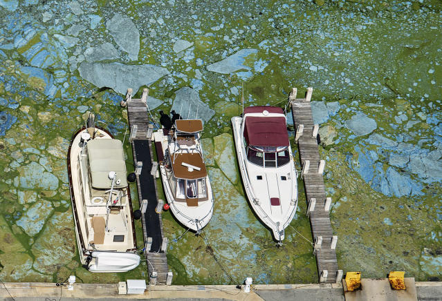 <p>Boats docked at Central Marine in Stuart, Fla., are surrounded by blue green algae, June 29, 2016. The 153-mile-long Indian River Lagoon has been plagued by harmful algae blooms. Water quality testing data analyzed by the AP showed the average phosphorous level _ a byproduct of fertilizers and human waste that algae thrive on, rose nearly 75 percent between 2000 and 2016. (Photo: Greg Lovett/The Palm Beach Post via AP) </p>