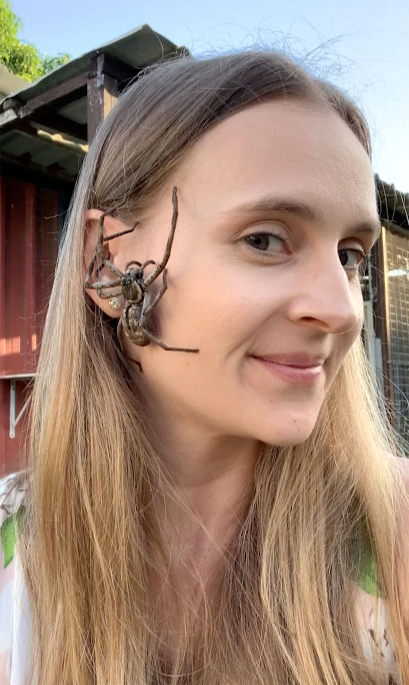 Queensland woman Tarni Roebuck lets spiders crawl on her face (pictured) and makes videos for her Instagram page.