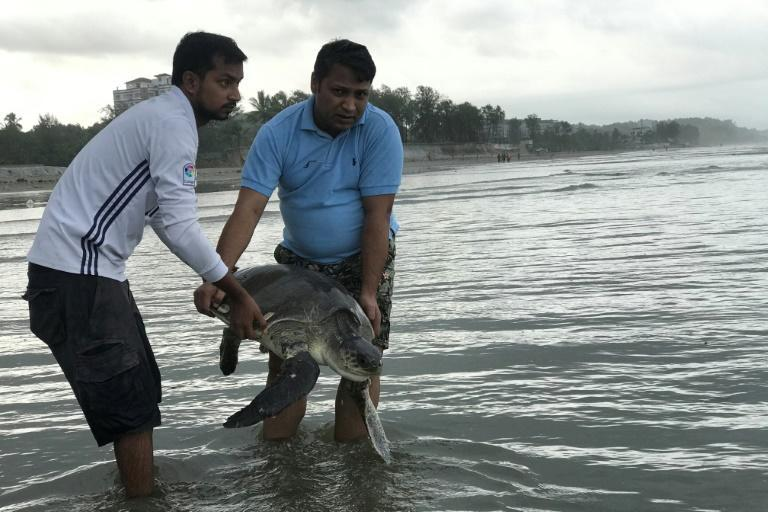 The Olive Ridley turtles floated to shore at Cox's Bazar with a huge mass of plastic bottles, fishing nets, buoys and other debris (AFP Photo/Suzauddin RUBEL)