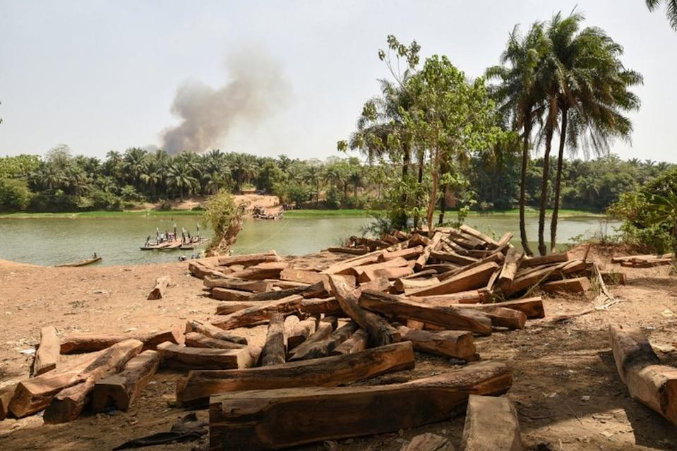 Rosewood is piled up by a river near Kamakwie in Sierra Leone on Sunday. Demand for the precious timber in China has fuelled illegal logging here and in other parts of West Africa in recent years.