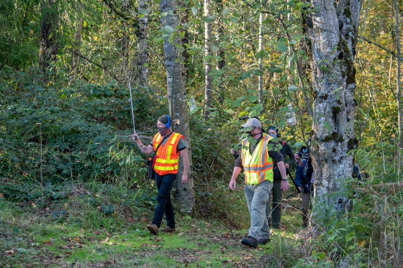 Washington State Department of Agriculture entomologists track three Asian giant hornets near Blaine