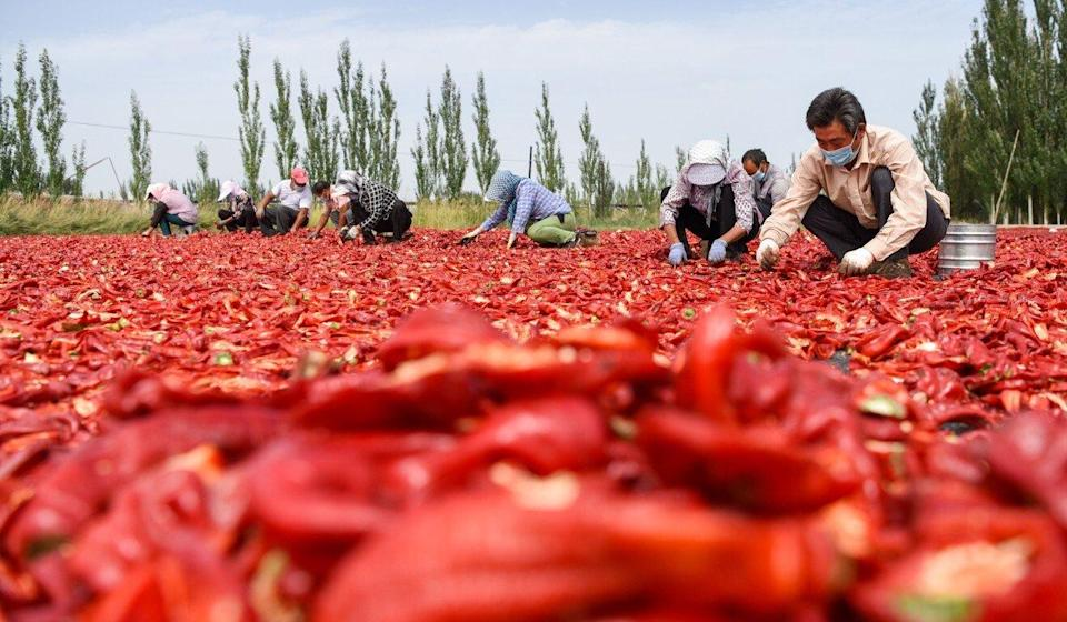 Farmers dry chilis in Dongdahan village in northwest China's Xinjiang region. Photo: Xinhua
