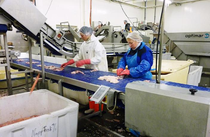 Workers gutts migrating and spawning east-Arctic cod at the Marine Fresh fish fileting factory in Napp, a village in Norway's Arctic archipelago Lofoten on February 7, 2012 (AFP Photo/Nina Larson)