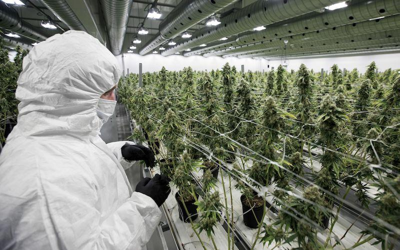 <p>Premier Brian Pallister says pot will be sold in private stores and online. Private sellers will be responsible for selling the product and setting the prices. Cannabis won't be available in the same locations where alcohol is sold. In some cases, stores could be banned in municipalities that do not want them. Photo from Getty Images. </p>