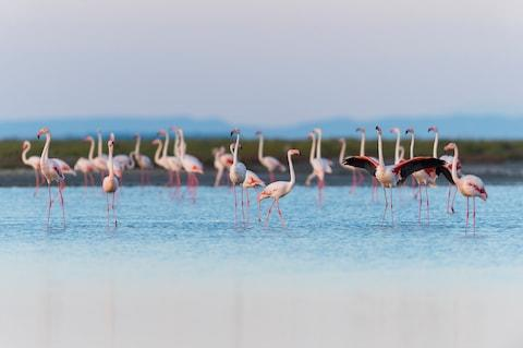 Spot flamingos a stone's throw from the city - Credit: GETTY