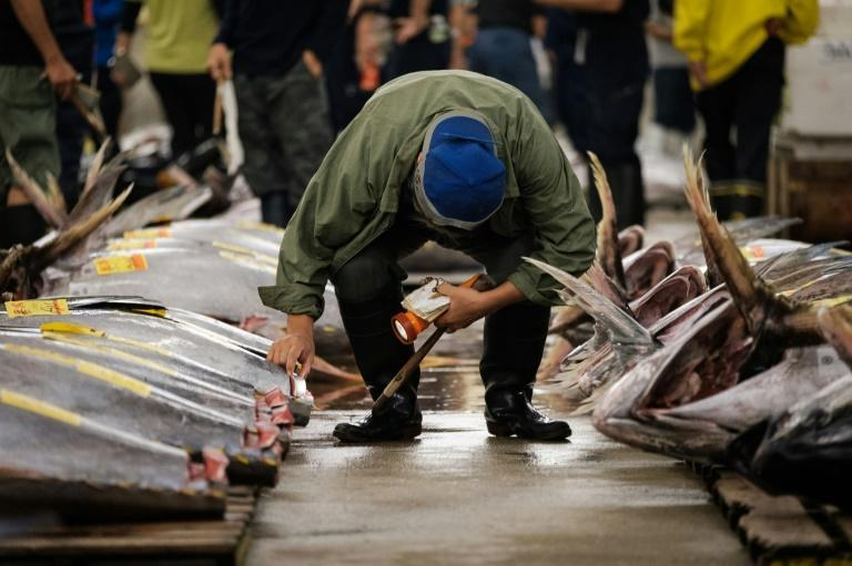 Tokyo's famous Tsukiji fish market, which hosted its last tuna auction on October 6, 2018, was transformed into a mass vaccination site on Tuesday