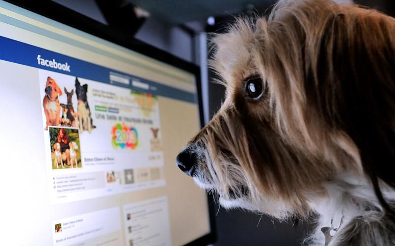 A dog stands in front of a computer screen with a facebook page opened on it, on January 4, 2013 in Lille, Northern France: DENIS CHARLET/AFP/Getty Images