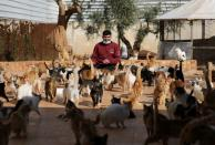 A worker plays with cats at Ernesto's sanctuary for cats in Idlib