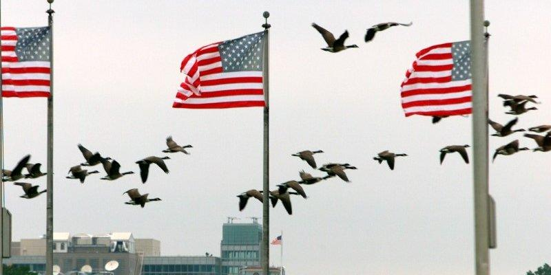 Canada Geese fly by the U.S. flags at the base of the Washington Monument, in Washington, in this September 18, 2003 file photo. REUTERS/Gregg Newton/Files