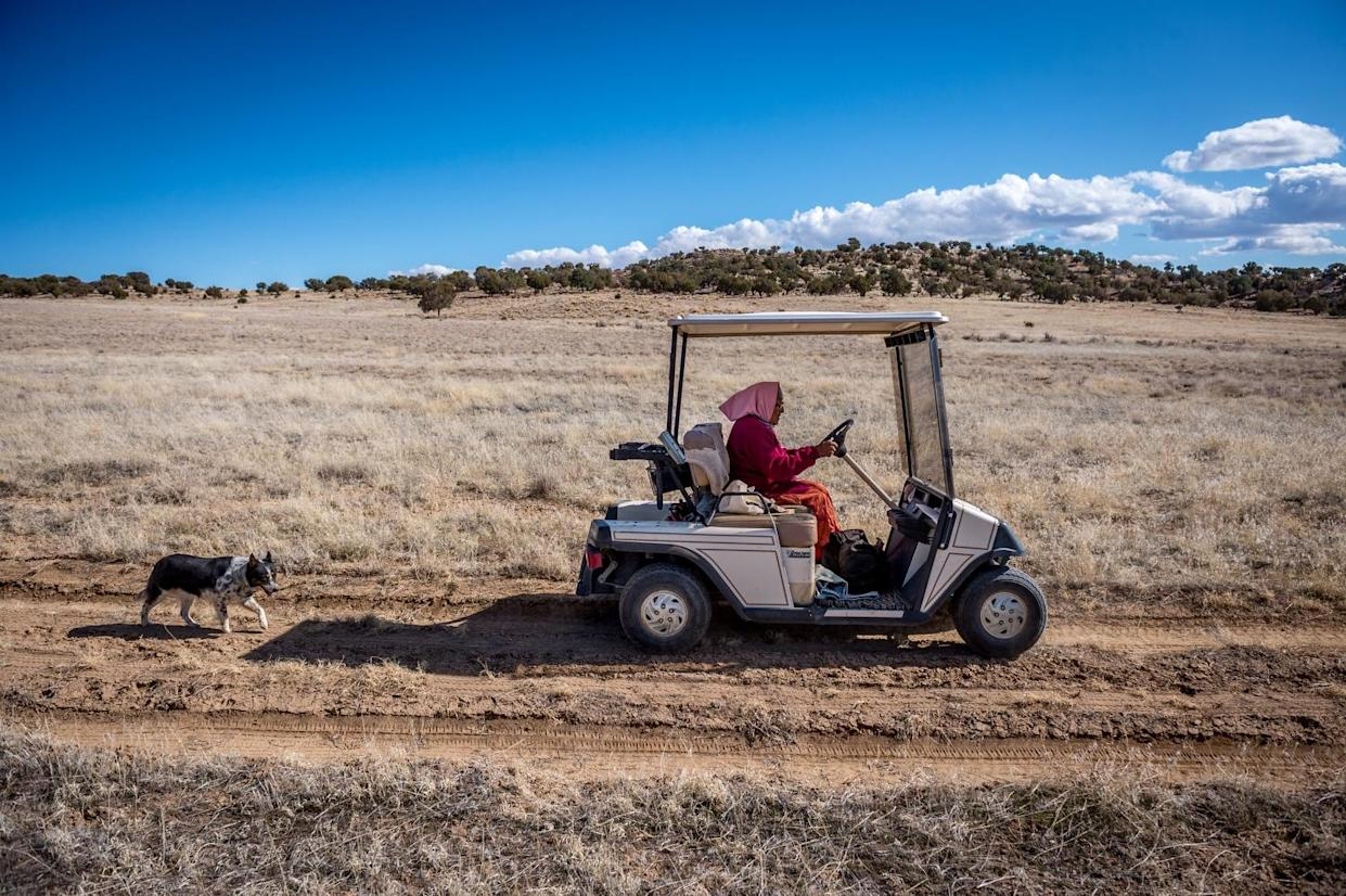 Helen Nez looks for her sheep on her property in Blue Gap, AZ. (Photograph by Mary F. Calvert)