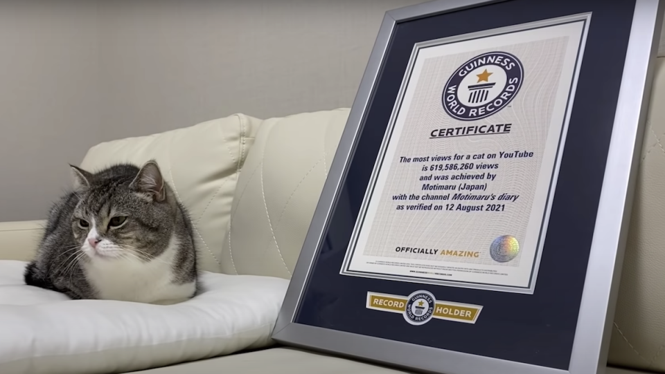 Motimaru the cat next to Guinness World Records certificate