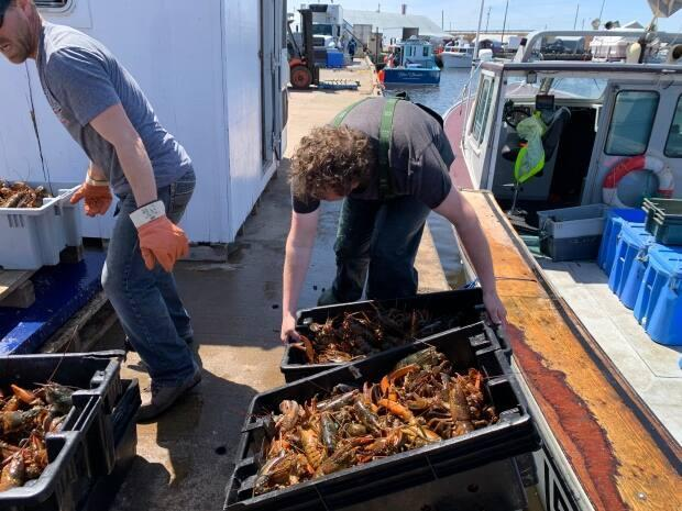 Fishermen, hired hands and buyers need strong backs to lift heavy tubs of fresh live lobster.