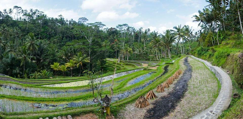 À Bali, les Aborigènes pratiquent l'agriculture au milieu d'une forêt tropicale riche en diversité. Photo d'illustration. (Photo: Eric Lafforgue via Corbis via Getty Images)